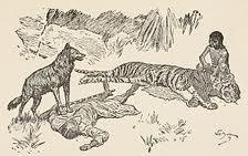 tiger-buldeo